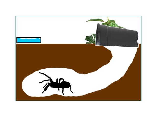 Basic Fossorial Enclosure Setup