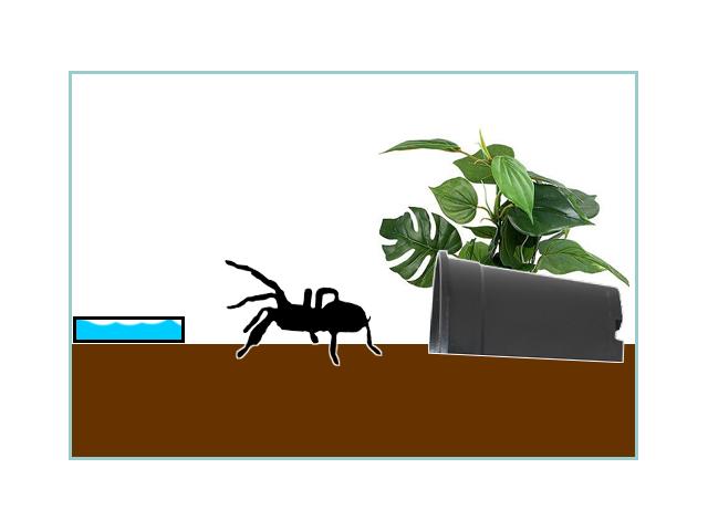 Basic Terrestrial Enclosure Setup