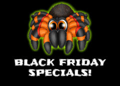 MyMonsters.co.za Black Friday Tarantula Specials!