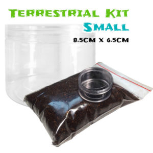 Terrestrial Spiderling Tarantula Kit - Small