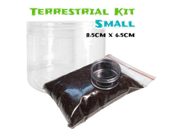 Terrestrial Spiderling Tarantula Kit - Small