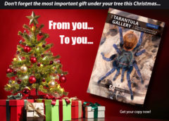 The Tarantula Gallery, Volume 1 - Image Reference & Species Accounts - Tarantula Care Guides - Tarantula Books